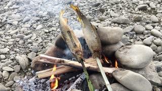 アユの塩焼き野外料理 No.3