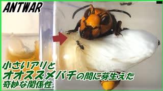 アリとオオスズメバチ。最強生物同士の戦いが生んだ奇跡。