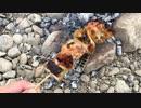 川で炭火の焼き鳥の野外料理 No.7