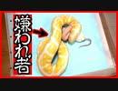 【ヘビは噛みつくの?】ヘビ(ボールパイソン・コーンスネーク)の魅力 エサ(マウス)について【狂暴なの?】