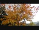 621豊平峡ダム紅葉