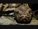 ニシキヘビの生態
