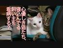 心優しき珍妙猫たち、飼い主の看病をする
