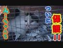 【シリーズ:猫を探していますの物語】5.ついにミーちゃんを保護した
