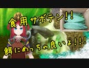 リクガメの餌に!春日井サボテン!!!