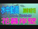 水中動画(2019年10月16日)in花暮岸壁