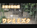 京都市動物園のワシミミズク
