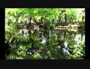 【音楽と動物】石神井公園に住まう生き物たち Vol.2