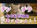 【動物】もぐもぐタイムが可愛いチンチラ