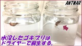 水没したゴキブリはドライヤーで温風をあてると息を吹き返す。