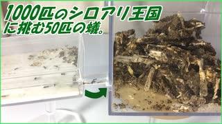 1000匹のシロアリ王国vs50匹の蟻~圧倒的劣勢に置かれた勇者蟻~