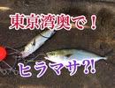 東京湾奥!青物釣ーリング!え!ヒラマサ?【もっち釣動組合♯...