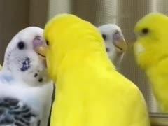 愛鳥の周りには危険がいっぱい!