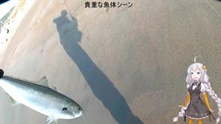 【VOICEROIDフィッシング】遠州ライトショ