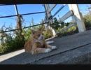 【ゆっくり】時雨梓の島猫レポート Vol.02【旅動画】