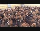 【動物】101匹どころじゃないワンちゃん