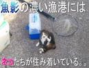 ネコに出会った日①
