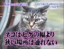 ホモと見るガセビア.usotsuki