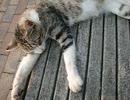 【カウントダウン】頭が落ちる猫