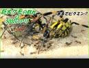 まるでピクミン?巨大グモの群れに突撃する5000匹のアリ!