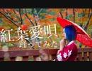 【紅葉】紅葉愛唄【踊ってみた】