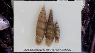 ゆっくり秋のカタツムリ採集 その3