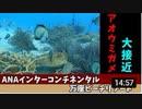 沖縄リゾート旅行記8 ウミガメ大接近なダイビング