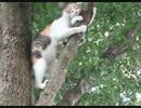 【ネコ】降りれなくなった子ネコ、さあどうする?www