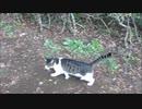 野良猫を手招きしたら延々と跡をつけられてしまった
