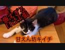 自己主張の強い子猫 キイチ