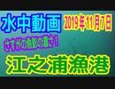 水中動画(2019年11月7日)in江之浦漁港