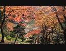 紅葉の京都(2019/11/17)