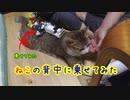 猫の背中におもちゃ乗っけてみたら・・・