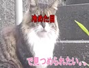 ネコに出会った日②「冷めた目で見つめられたい。。」