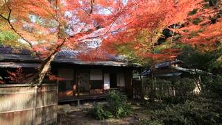 紅葉の京都(2019/11/23,24)