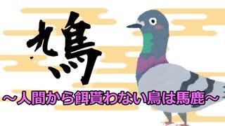 鳩 ~人間から餌貰わない鳥は馬鹿~