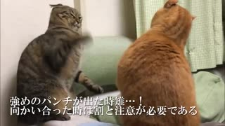 甘ったれトラ猫義兄弟、仲良く小競り合いする