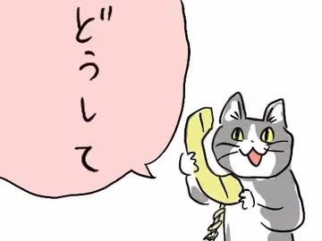 どうして 電話 猫