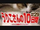 うりこさんの10日間 - 2019#29