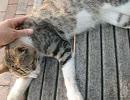 【猫だって肩が凝る?】ニャンコの全身マッサージ