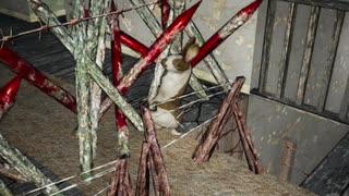 [7DTD] 悪夢の動物園は常走15 [α18.1]