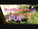 【度アップ】サーバルキャットの度アップ顔に惚れ惚れ[愛媛県立とべ動物園](俺の動物観察)[俺のシリーズ]