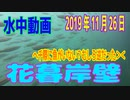 水中動画(2019年11月26日)in花暮岸壁
