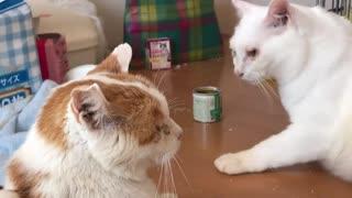 末期腎不全の愛され地域猫、緩和ケア中に寄り添う猫が現れる