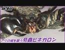 第68位:アリが防衛する城を襲う奇蟲ビネガロン!