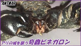 アリが防衛する城を襲う奇蟲ビネガロン!