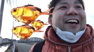 【外来種ハンター】今年最後の雷魚釣り?ある事情により金魚すくいになるw