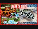 【激安⁉】東京レプタイルズワールド2019冬でレオパ(ヒョウモ...