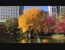 紅葉のピークとその後 at 日比谷公園