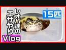【置きエサ!】レオパ(ヒョウモントカゲモドキ)にレオパブレンドフードをあげる!!【エサやり】